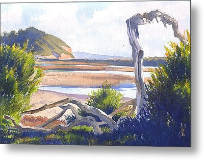 Driftwood At Torrey Pines Metal Print by Mary Helmreich