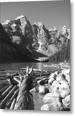 Driftwood - Black And White Metal Print by Marcia Socolik