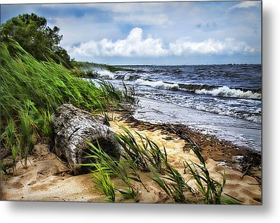 Driftwood By The Sea Metal Print by Trudy Wilkerson