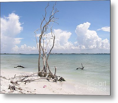 Metal Print featuring the photograph Driftwood by Carol  Bradley