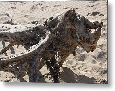 Metal Print featuring the photograph Driftwood Creature I by Amanda Holmes Tzafrir