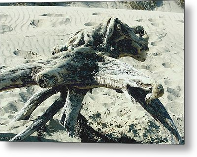 Metal Print featuring the photograph Driftwood Creature II by Amanda Holmes Tzafrir