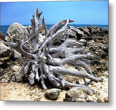 Metal Print featuring the photograph Driftwood by Judy Palkimas