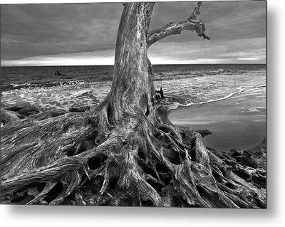 Driftwood On Jekyll Island Black And White Metal Print by Debra and Dave Vanderlaan
