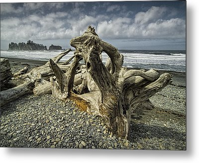 Driftwood On Rialto Beach In Olympic National Park No. 144 Metal Print by Randall Nyhof