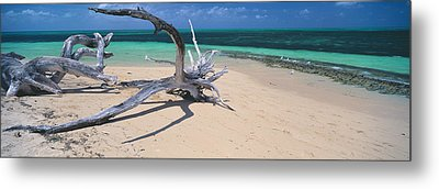 Driftwood On The Beach, Green Island Metal Print by Panoramic Images