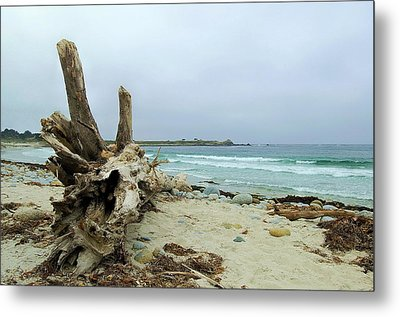 Driftwood Metal Print by Tamyra Crossley