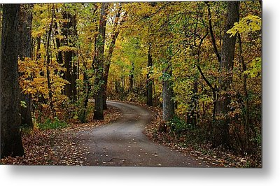 Drive Through The Woods Metal Print by Bruce Bley
