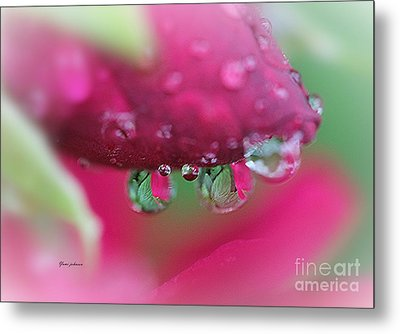 Droplets On The Rose Metal Print
