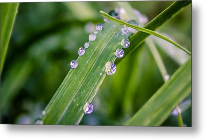 Drops On Grass Metal Print by Rob Sellers
