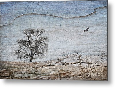 Drought Metal Print by Alice Cahill