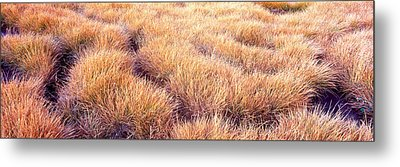 Dry Grass In A National Park, South Metal Print