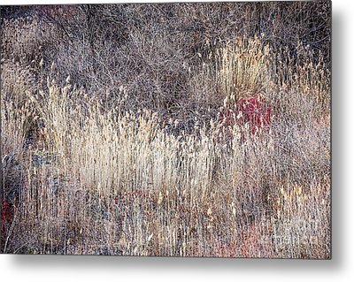 Dry Grasses And Bare Trees In Winter Forest Metal Print by Elena Elisseeva