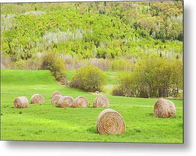 Dry Hay Bales In Spring Farm Field Maine Metal Print by Keith Webber Jr