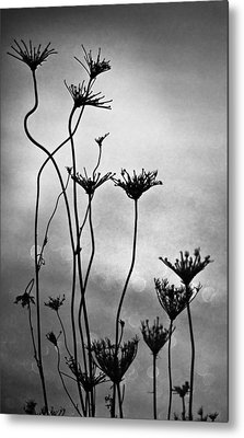 Metal Print featuring the photograph Dry Plants by Arkady Kunysz
