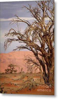 Dry Tree In The Desert Metal Print