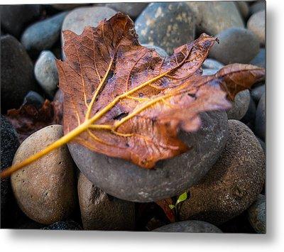 Drying Leaf Metal Print by Mike Lee
