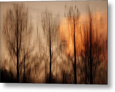 Metal Print featuring the photograph Drying Wet by Lorenzo Cassina
