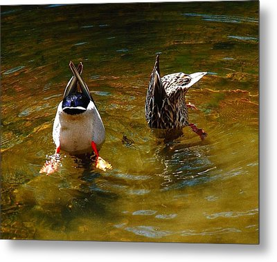 Metal Print featuring the photograph Duck Butts by Steven Reed