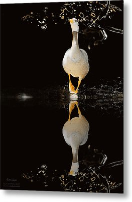 Duck On Stage Metal Print