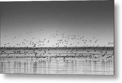 Duck Over Lake 1 B_w Metal Print