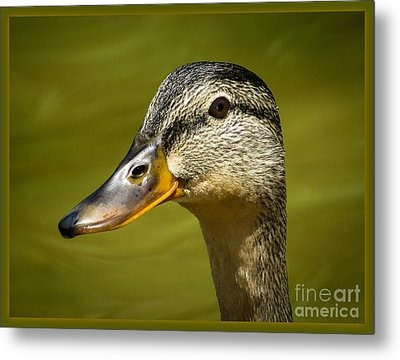 Metal Print featuring the photograph Duck Protrait by Brenda Bostic