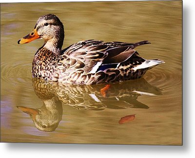 Duck Reflection Metal Print by Paulette Thomas