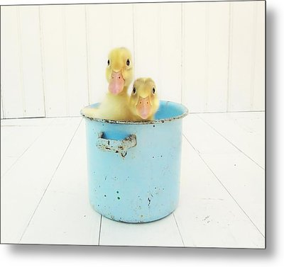 Duck Soup Metal Print
