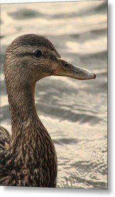 Duck Up Close Metal Print