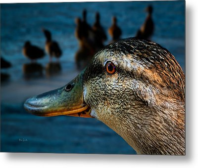 Duck Watching Ducks Metal Print