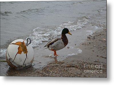 Duckie Duckie Metal Print