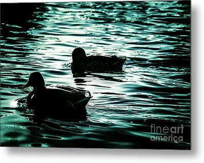 Duckies Metal Print