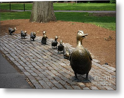 Ducklings Metal Print by Christiane Schulze Art And Photography