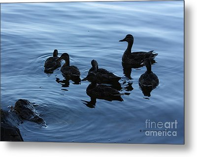 Ducks At Dusk Metal Print