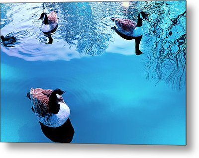 Metal Print featuring the photograph Ducks At Pond by Marwan Khoury