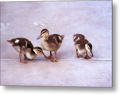 Metal Print featuring the photograph Ducks In A Row by Clare VanderVeen