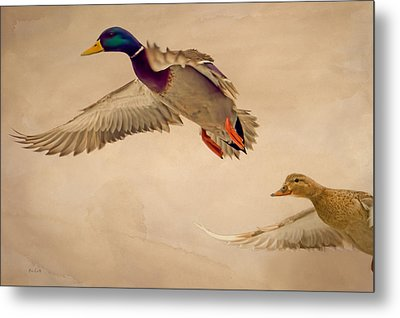 Ducks In Flight Metal Print by Bob Orsillo