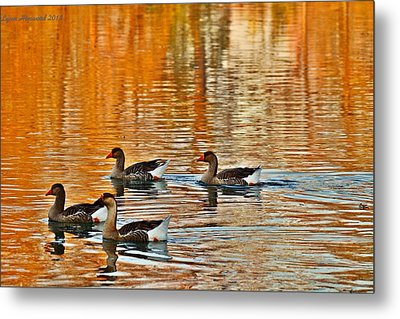 Metal Print featuring the photograph Ducks In The Fall by Lynn Hopwood