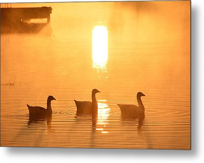 Ducks On A Foggy Lake At Sunrise Metal Print
