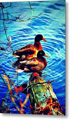 Metal Print featuring the photograph Ducks On A Log by Tara Potts
