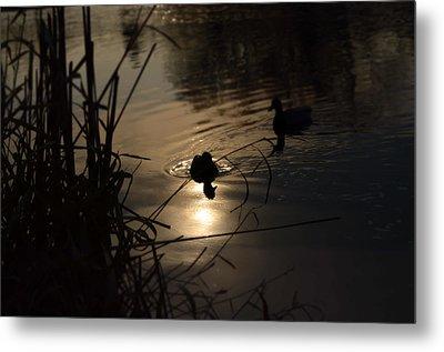 Ducks On The River At Dusk Metal Print by Samantha Morris