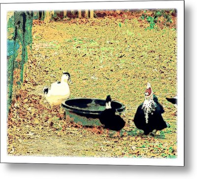 Ducky Afternoon Metal Print by YoMamaBird Rhonda