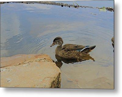 Ducky One Metal Print