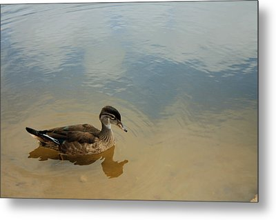 Ducky Two Metal Print