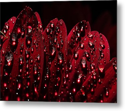 Due To The Dew Metal Print