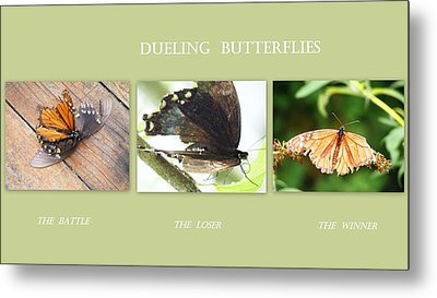 Metal Print featuring the photograph Dueling Butterflies Collage by Margie Avellino