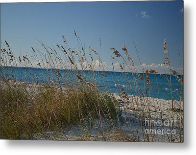 Metal Print featuring the photograph Dune Grasses by Judy Wolinsky