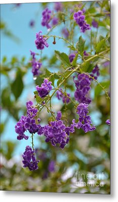 Metal Print featuring the photograph Duranta- Fresh Morning by Darla Wood