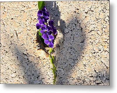 Metal Print featuring the photograph Duranta- Shadow Play 1 by Darla Wood