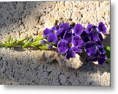Metal Print featuring the photograph Duranta- Shadow Play 2 by Darla Wood
